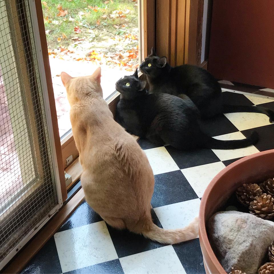 burkecats1SQ