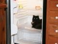 bixbycatscradlefridge