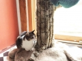 granitecattree