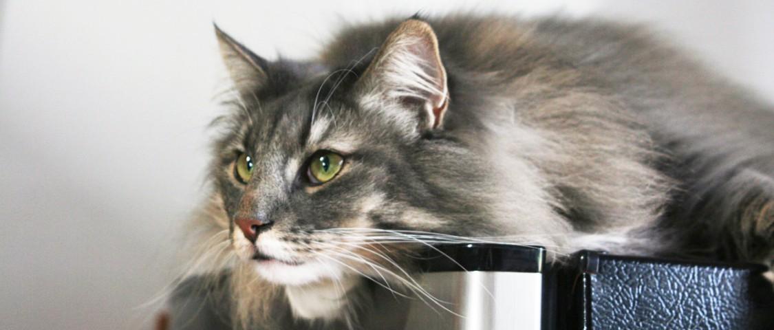 Cat S Cradle Deerfield
